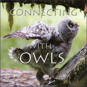 Connecting-with-Owls-DVD-Pic